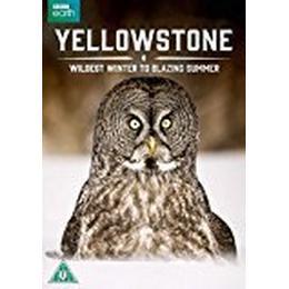 Yellowstone - Wildest Winter to Blazing Summer [DVD] [2016]